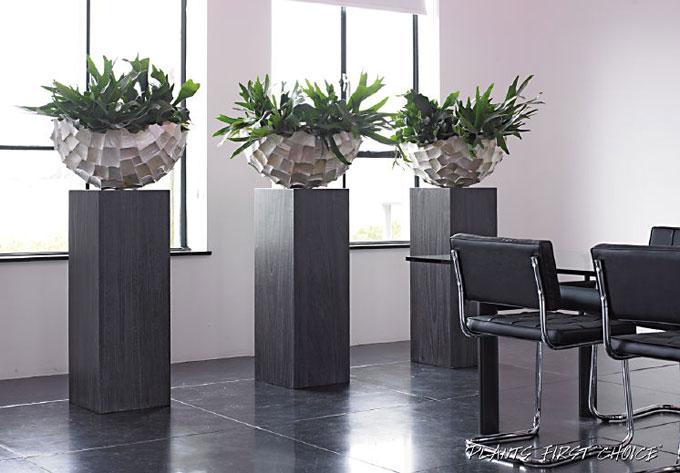 Advies op maat over uw planten thuis en kantoor - Decoratie kantoor ...